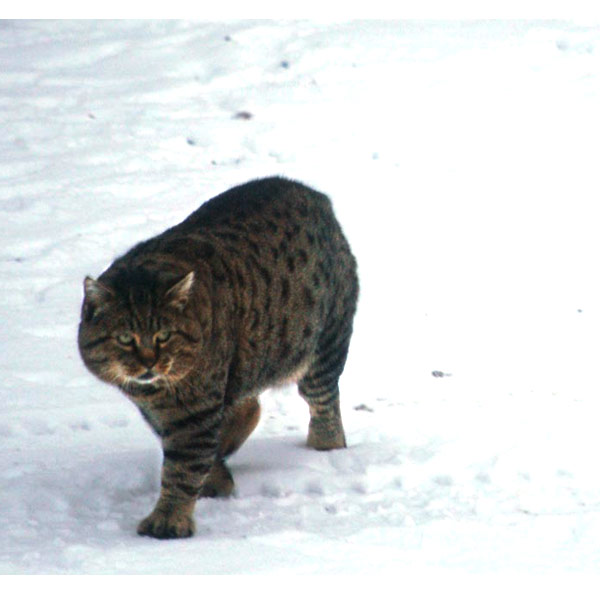 Snow Prowling